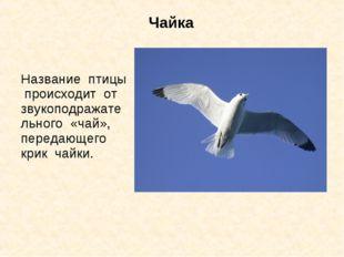 Чайка Название птицы происходит от звукоподражательного «чай», передающего кр