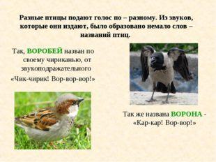 Разные птицы подают голос по – разному. Из звуков, которые они издают, было о