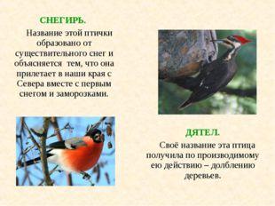 СНЕГИРЬ. Название этой птички образовано от существительного снег и объясняе