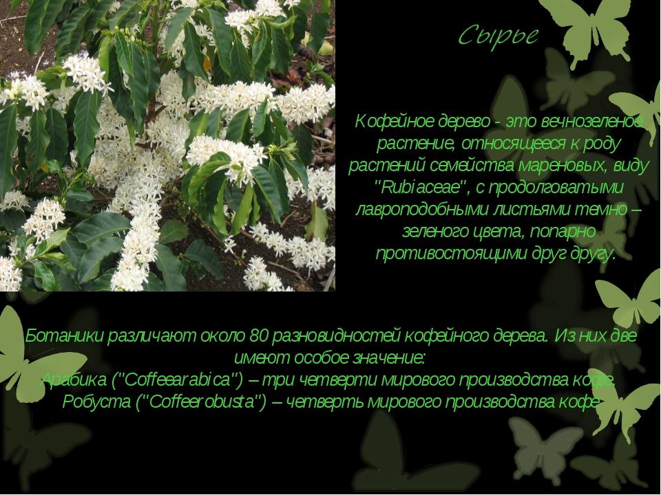 Кофейное дерево - это вечнозеленое растение, относящееся к роду растений семе...