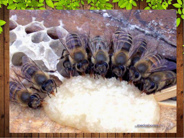 Взимку бджоли не сплять,через це на зиму їм необхідно запасати достатню кільк...