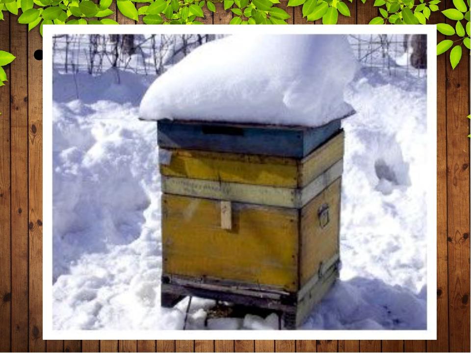Створюючи повний спокій бджолам, пасічники збільшують медозбір навесні.
