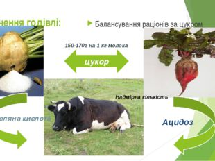 Значення годівлі: Балансування раціонів за цукром цукор 150-170г на 1 кг моло