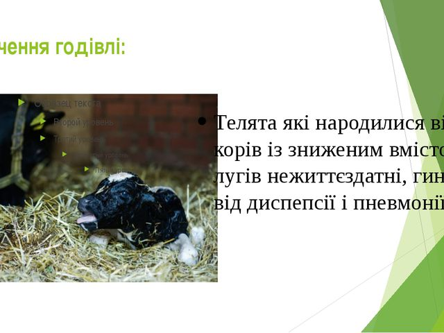 Значення годівлі: Телята які народилися від корів із зниженим вмістом лугів н...