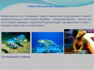 Севастопольский аквариум Куприн описал его в «Поединке». Один из героев повес