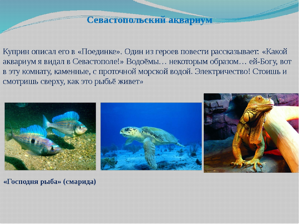 Севастопольский аквариум Куприн описал его в «Поединке». Один из героев повес...