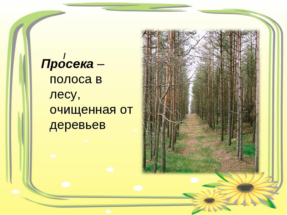 Просека – полоса в лесу, очищенная от деревьев /