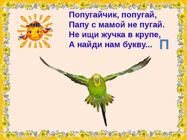 Попугайчик, попугай, Папус мамой не пугай. Не ищи жучка в крупе, А найди на...