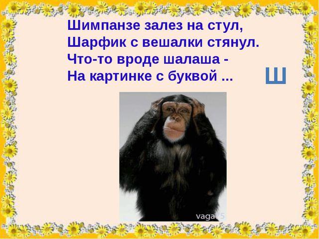 Шимпанзезалез на стул, Шарфикс вешалки стянул. Что-то вродешалаша- На ка...