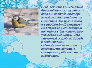 Одна погибшая зимой самка большой синицы за лето дала бы десятка полтора моло
