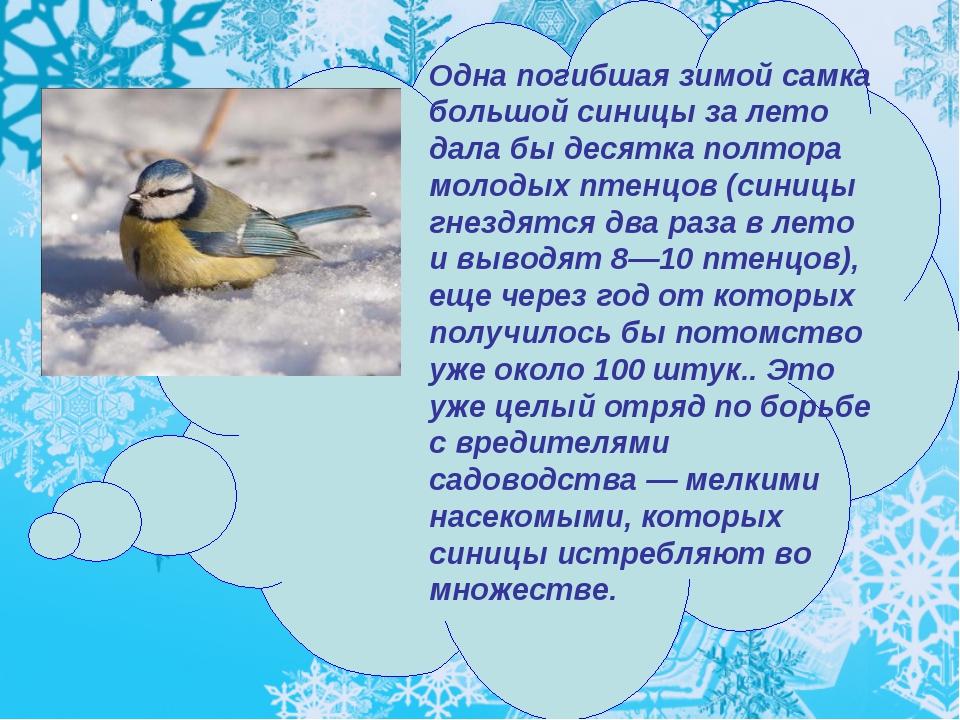 Одна погибшая зимой самка большой синицы за лето дала бы десятка полтора моло...