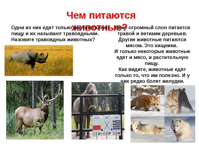 Чем питаются животные? Одни из них едят только растительную пищу и их называю...