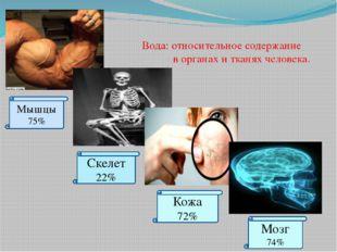 Вода: относительное содержание в органах и тканях человека. Мышцы 75% Скелет