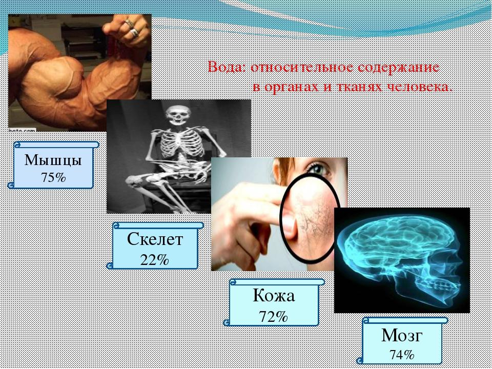 Вода: относительное содержание в органах и тканях человека. Мышцы 75% Скелет...