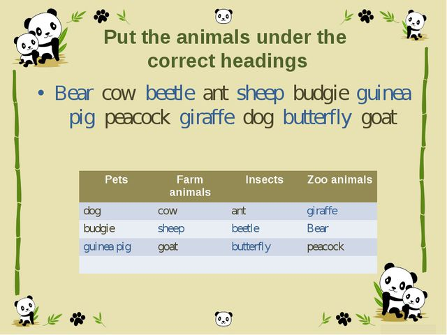 Put the animals under the correct headings Bear cow beetle ant sheep budgie g...