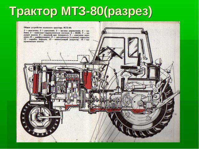 Трактор МТЗ-80(разрез)