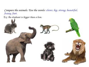 Compare the animals. Use the words: clever, big, strong, beautiful, funny, f