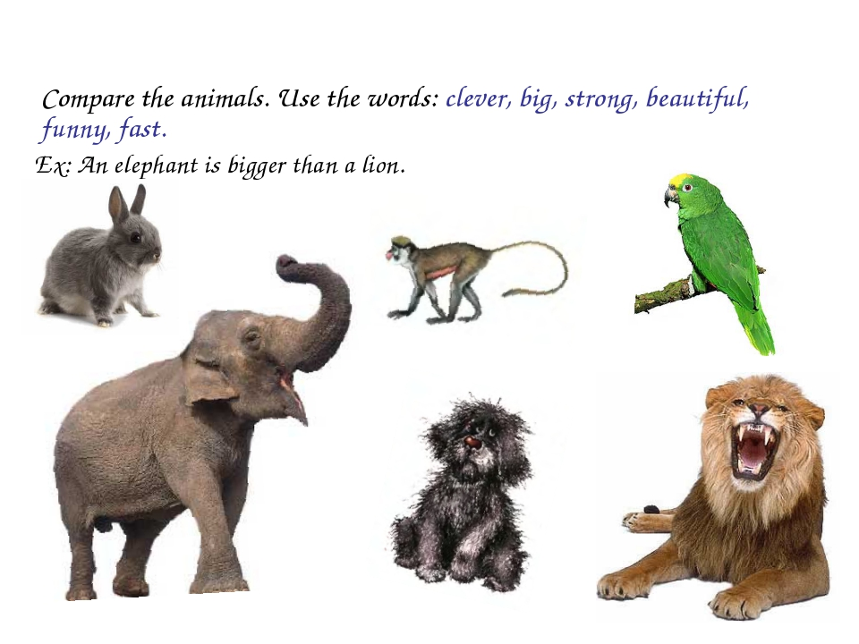 Compare the animals. Use the words: clever, big, strong, beautiful, funny, f...