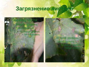 Загрязнение листьев