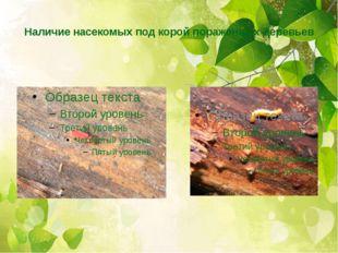 Наличие насекомых под корой пораженных деревьев