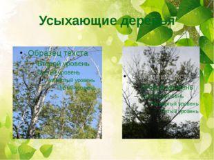 Усыхающие деревья