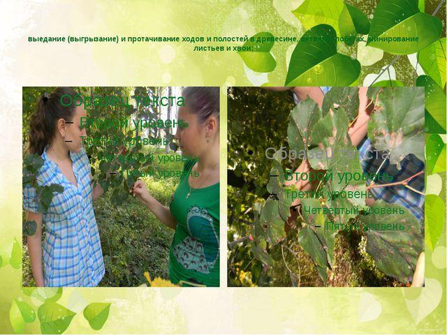 выедание (выгрызание) и протачивание ходов и полостей в древесине, ветвях и...