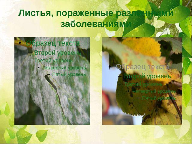 Листья, пораженные различными заболеваниями