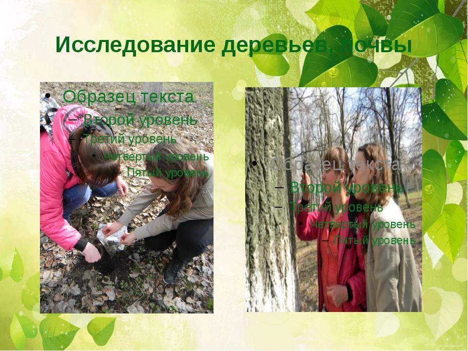 Исследование деревьев, почвы