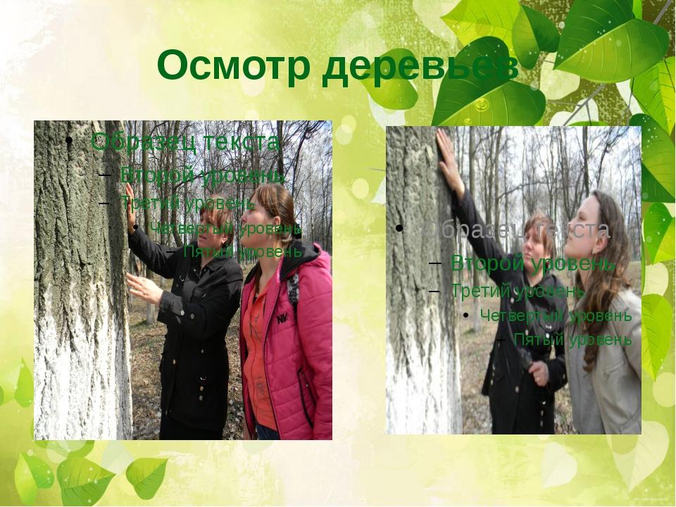 Осмотр деревьев