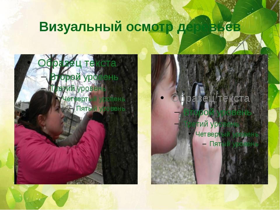 Визуальный осмотр деревьев
