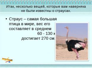 Итак, несколько вещей, которые вам наверняка не были известны о страусах. Стр