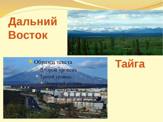 Дальний Восток Тайга