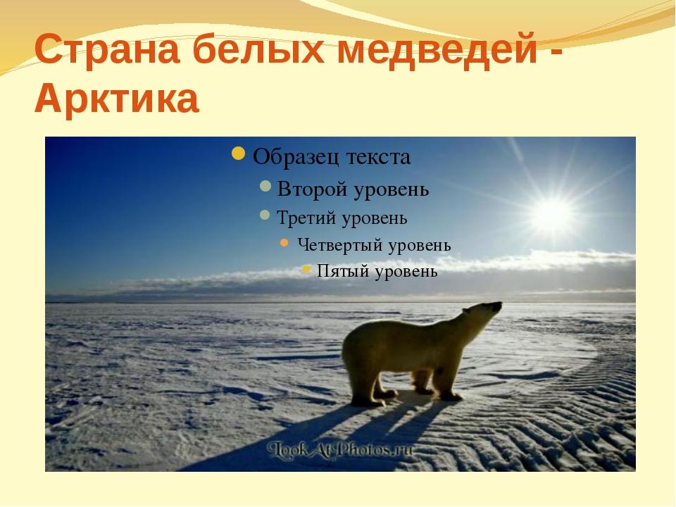 Страна белых медведей - Арктика