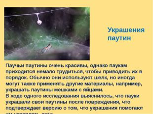 Украшения паутин Паучьи паутины очень красивы, однако паукам приходится немал