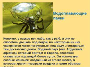 Водоплавающие пауки Конечно, у пауков нет жабр, как у рыб, и они не способны