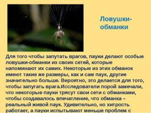 Ловушки- обманки Для того чтобы запутать врагов, пауки делают особые ловушки-