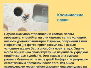 Космические пауки Пауков-скакунов отправляли в космос, чтобы проверить, спосо