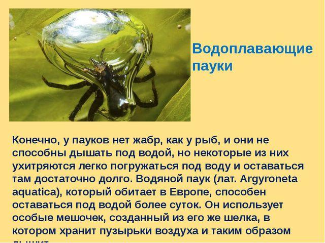 Водоплавающие пауки Конечно, у пауков нет жабр, как у рыб, и они не способны...