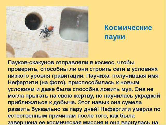 Космические пауки Пауков-скакунов отправляли в космос, чтобы проверить, спосо...