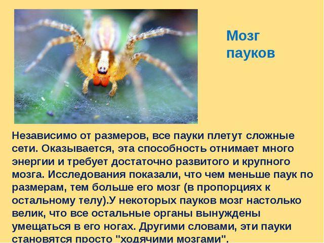 Мозг пауков Независимо от размеров, все пауки плетут сложные сети. Оказываетс...