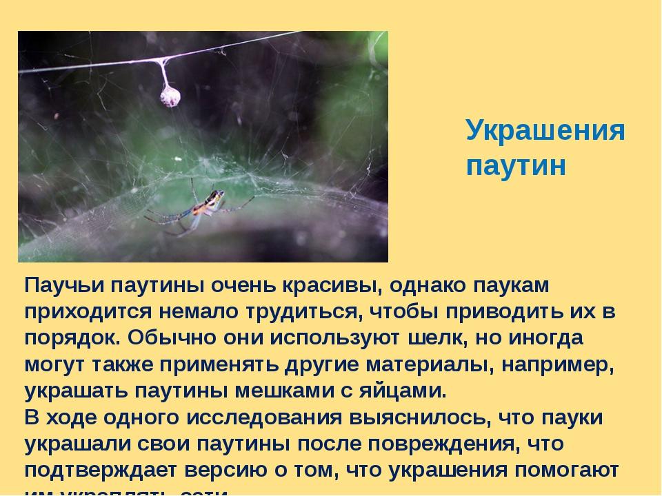 Украшения паутин Паучьи паутины очень красивы, однако паукам приходится немал...