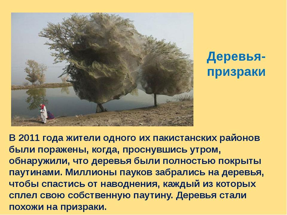 Деревья- призраки В 2011 года жители одного их пакистанских районов были пора...