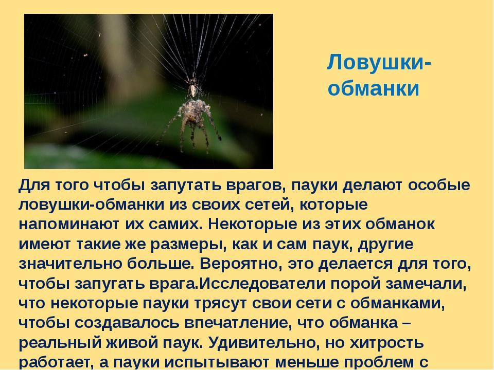 Ловушки- обманки Для того чтобы запутать врагов, пауки делают особые ловушки-...
