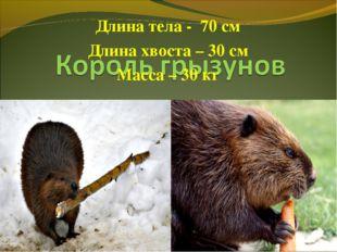 Длина тела - 70 см Длина хвоста – 30 см Масса – 30 кг
