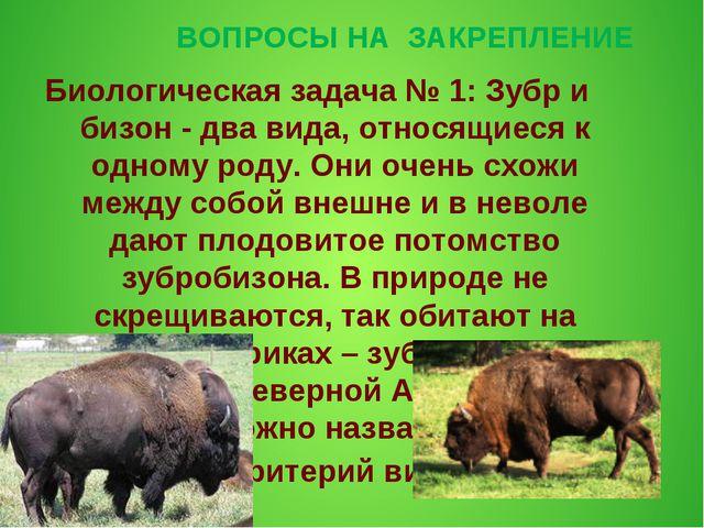ВОПРОСЫ НА ЗАКРЕПЛЕНИЕ Биологическая задача № 1: Зубр и бизон - два вида, отн...