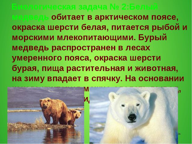 Биологическая задача № 2:Белый медведь обитает в арктическом поясе, окраска...