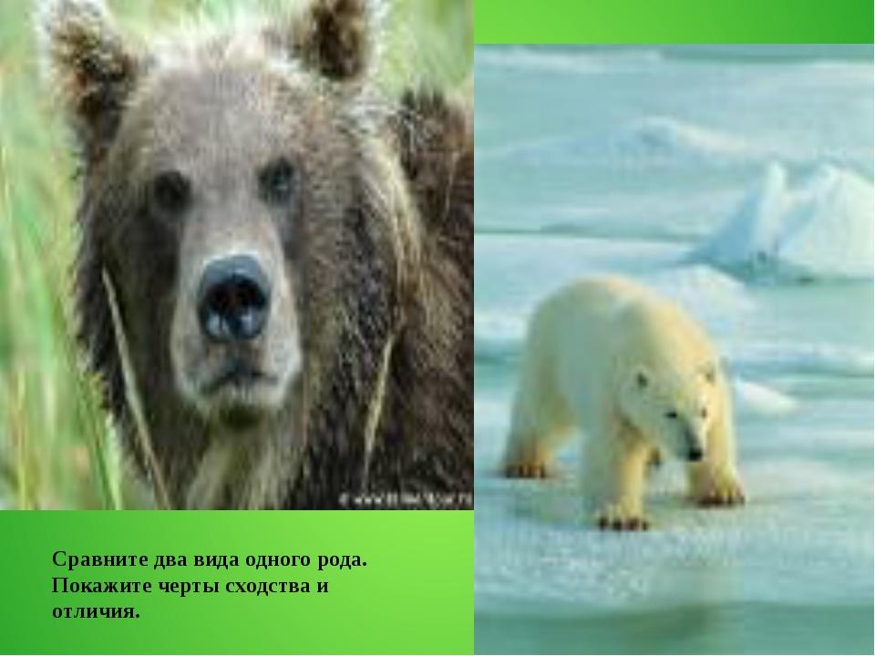 Сравните два вида одного рода. Покажите черты сходства и отличия.