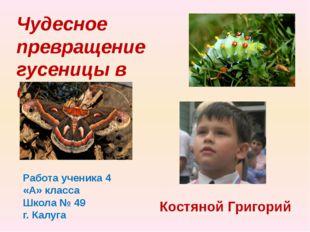Чудесное превращение гусеницы в бабочку Работа ученика 4 «А» класса Школа № 4