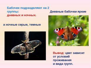 Бабочек подразделяют на 2 группы: дневных и ночных. Дневные бабочки яркие а н