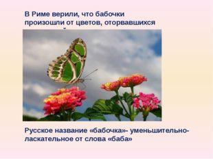 В Риме верили, что бабочки произошли от цветов, оторвавшихся от растений Русс